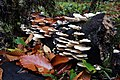 Decomposers (15460695842).jpg