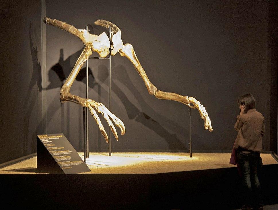 Deinocheirus hands