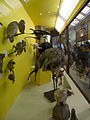 Denis Bourez - Natural History Museum, London (8900354243).jpg