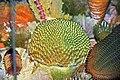 Diorama of a Devonian seafloor - corals, crinoid, trilobites, fenestate bryozoans (44743706645).jpg