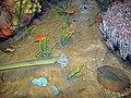Diorama of a Silurian seafloor - cephalopods, brachiopods, trilobites, corals, algae, bivalves (44993862134).jpg