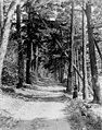 Dirt road through forest, ca 1898-1899 (WASTATE 2558).jpeg