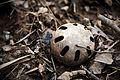 Discarded whiffle ball.jpg