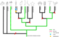 Distribution of fluorescent proteins in metazoans - 40851 2020 161 Fig2 HTML.png