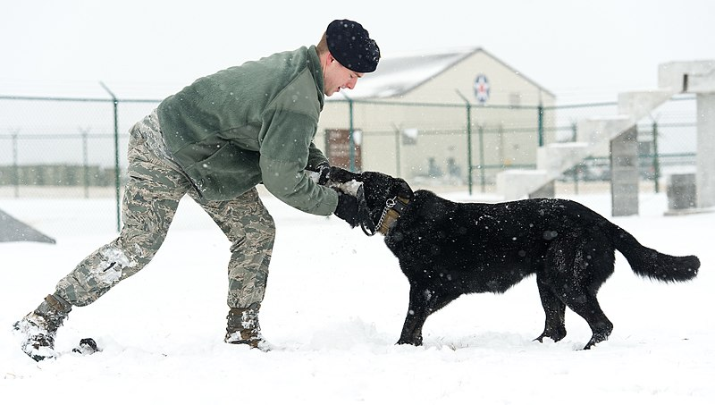 Image Result For Dog Training Tug