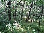 Dovhorakivskyi Botanical Reserve (2019.05.26) 03.jpg