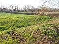 Drabiv, Cherkas'ka oblast, Ukraine - panoramio (2).jpg