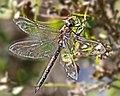 Dragonfly 9-13-05 Morro Bay, CA cce2-dragonfly-3829-9-13-05-20x16.jpg