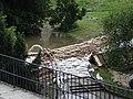 Dresden Brühlscher Garten Bärenzwinger Flut 7. Juni 2013 (143).jpg