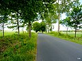 Droga do Piaseczna. - panoramio (1).jpg