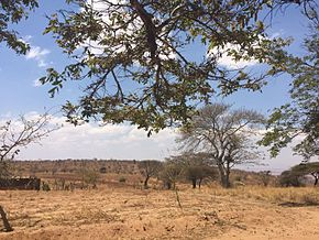Drought in the Kongwa District, Dodoma Region, Tanzania, East Africa.jpg