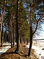 Druvciema piekraste - panoramio (9).jpg