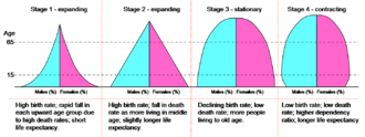 Demographic transition - One such visualization of this effect may be approximated by these hypothetical population pyramids.