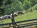 Durău 617130, Romania - panoramio (3).jpg