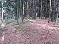 Dusetų sen., Lithuania - panoramio (128).jpg