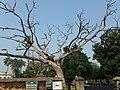 Dutch Cemetry at Chinsurah, Hooghly 07.jpg