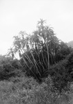 ETH-BIB-Palmen-Kilimanjaroflug 1929-30-LBS MH02-07-0463.tif