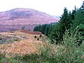 Edge of the Forestry - geograph.org.uk - 270158.jpg