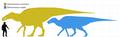 Edmontosaurus species scale diagram.png
