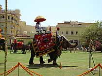 Elephant polo.jpg
