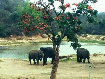 Elephats.jpg