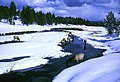 Elk (Wapiti) in Gibbon River during winter at Yellowstone National Park (d3843c64-6d27-4cb0-aef6-5b640a8fa065).jpg