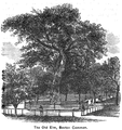Elm Common Boston Bacon 1886.png