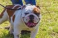 Encontro Dog Institute (41893154332).jpg