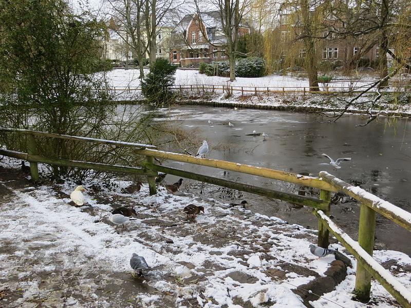 File enten beim teich vom stadtpark flensburg im winter for Teich im winter