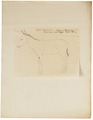 Equus asinus - 1700-1880 - Print - Iconographia Zoologica - Special Collections University of Amsterdam - UBA01 IZ21700007.tif