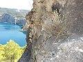 Erisos, Greece - panoramio (13).jpg