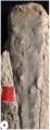 Estampa-Gangamopteris-Buriadica-Hoelzel.png