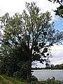 Etang de Saint-Georges-sur-Eure Eure-et-Loir (France).JPG