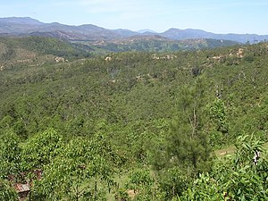Eucalyptus alba dominated woodland on heavily weathered heavy clays about 5 km north of Aileu, Timor-Leste.jpg