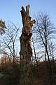 Eule auf der Baumspitze.jpg