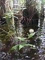 Everglades visit.jpg