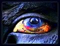 Eye - Flickr - Stiller Beobachter.jpg