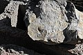 Fósiles - panoramio.jpg