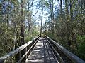 FL Blackwater River SP bdwlk02.jpg