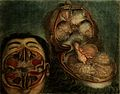 Face and brain; dissections. Colour mezzotint by J.F. Gautie Wellcome V0007912.jpg