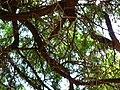 Fale - Giardini Botanici Hanbury in Ventimiglia - 482.jpg