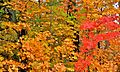 Fall Colors (1905713273).jpg
