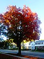 Fall Colors in Maple Bluff - panoramio.jpg