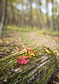 Fall Log (29689130694).jpg