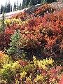 Fall colors (0720bb3cf8ab42b4b1c35f1473e6bc17).JPG