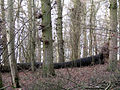 Fallen tree - geograph.org.uk - 641932.jpg