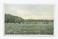 Fat Cattle and Alfalfa in the Pecos Valley, New Mexico (NYPL b12647398-74445).tiff