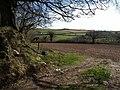 Field near Halwell - geograph.org.uk - 1242512.jpg