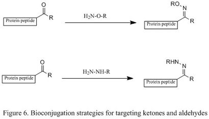 Figure 6. Bioconjugation strategies for targeting ketones and aldehydes.jpg