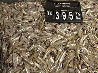 Fishes for Sale in Dhaka 02.jpg